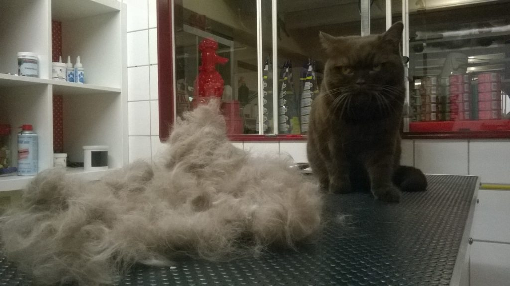 Behandelingen The Catbarber